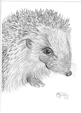 Hedgehog Smiling pic