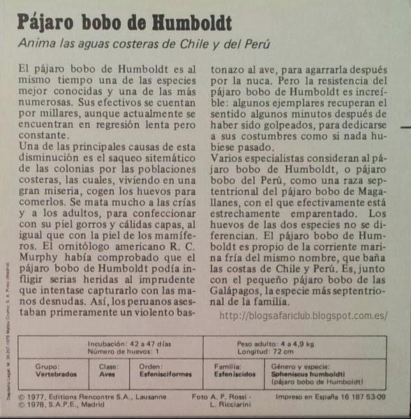 Blog Safari Club, características del Pájaro bobo de Humboldt