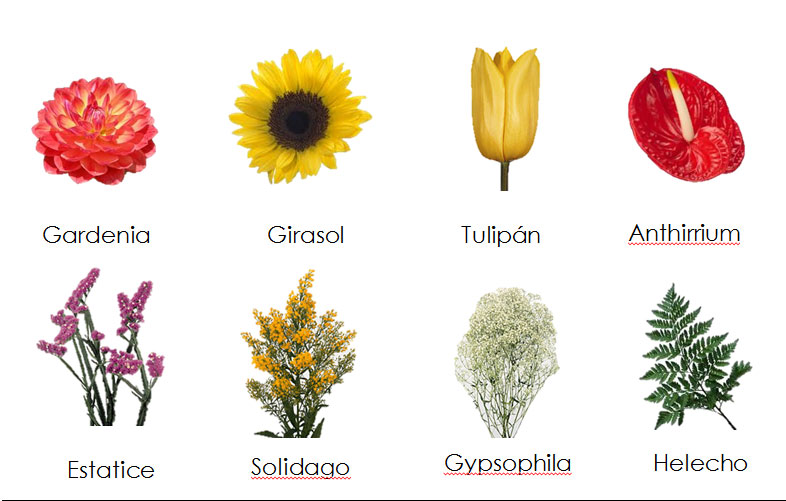 Florecitas - Clases de flores y sus nombres ...