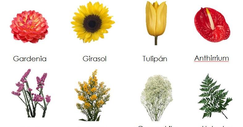 Florecitas tipos de flores for Plantas decorativas con sus nombres
