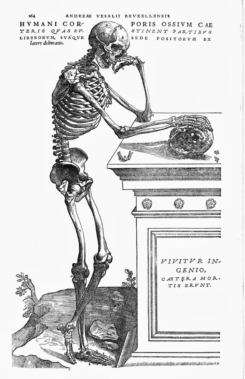 解剖学と芸術: 『ファブリカ』の解剖図の芸術性