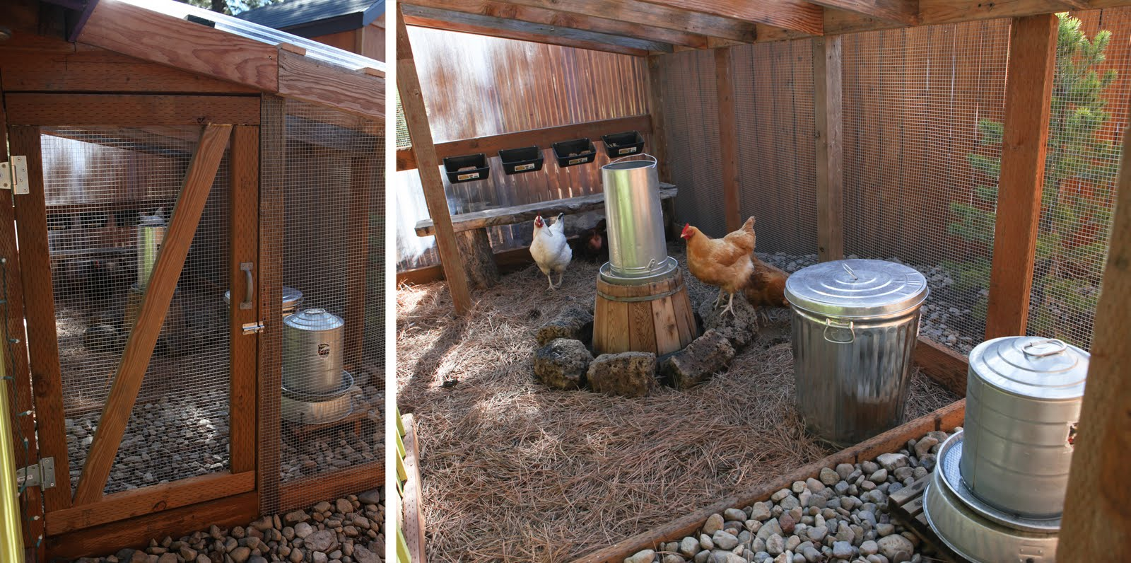 The Poop Hammock Keeping Your Coop Clean Community
