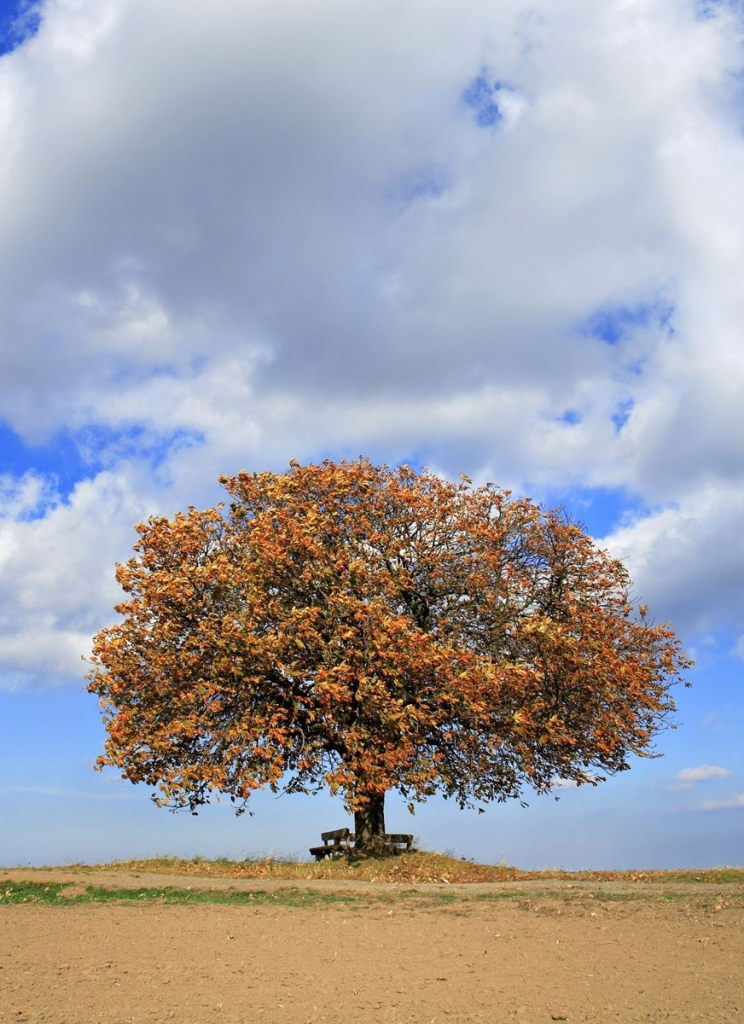 Comments On Life Is Beautiful The Life of a Tree: Ro...
