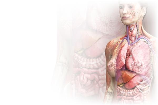 M dicos costa rica visualiza el interior del cuerpo for Cuerpo humano interior