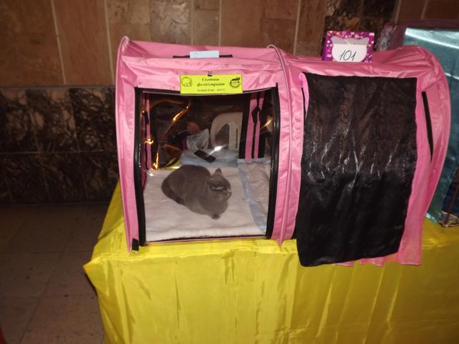 Палатка для кошек на выставку своими руками 100