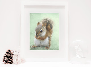 Squirrel Photography for Nursery and Home Wall Decor. You can purchase and download our photography creations and instantly print at home from our Paper Meadows Photography Shop on ETSY. To Visit our shop now click here.