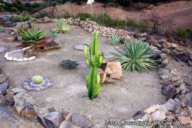 Setembro 2011 - Início, porém já plantadas. Vejam o tamanho da plantinha que está entre o Cactos e a Aloe, essa é aquela linda que dá as flores vermelhas (Lampranthus)