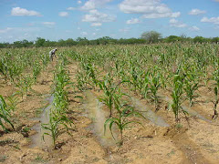 Irrigação de salvação com água de chuva