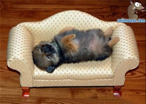 clip art and picture Funny Puppy Sleeping images : FunnyPuppySleepingimages1 from clipartandpicture.blogspot.com size 501 x 355 jpeg 33kB