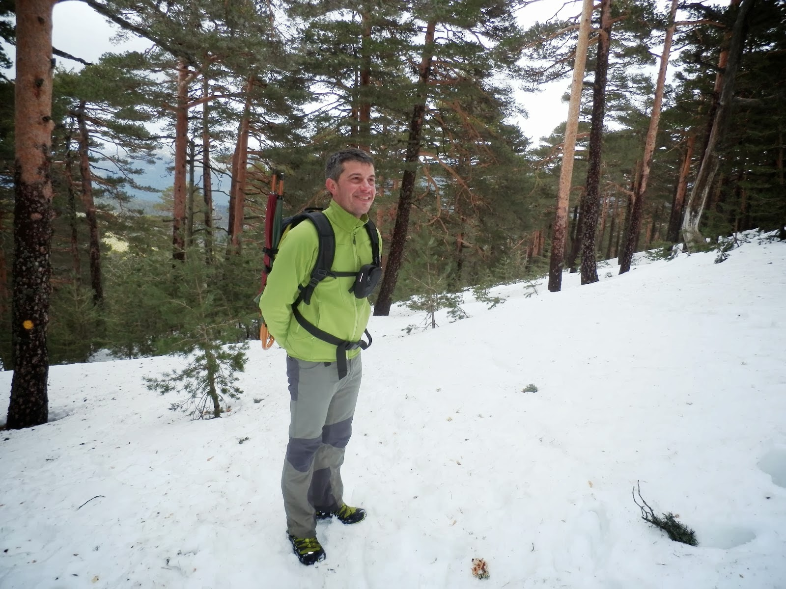 Paisaje-nevado-entre-pinares-en-la-Sierra-de-Guadarrama
