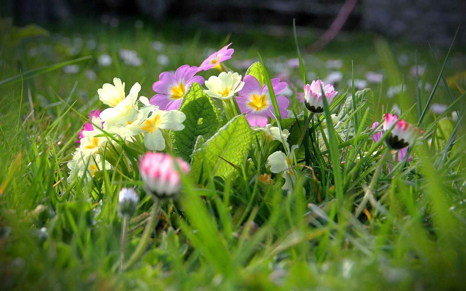 Bloemen in bloei in de lente