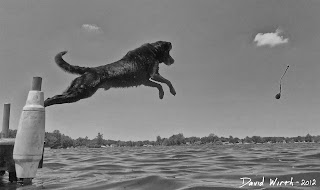 dog jump dock water lake lab, kong, floating
