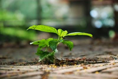 Πότε φυτεύονται τα δέντρα