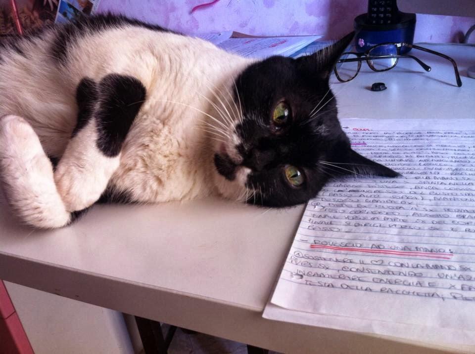 Il mio gattone studioso!