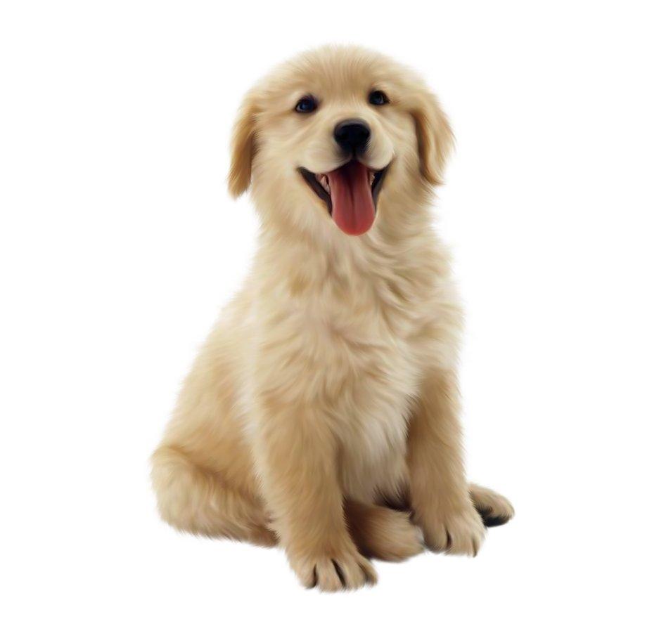 Pertolongan Pertama Pada Gigitan Anjing Obat Sakit
