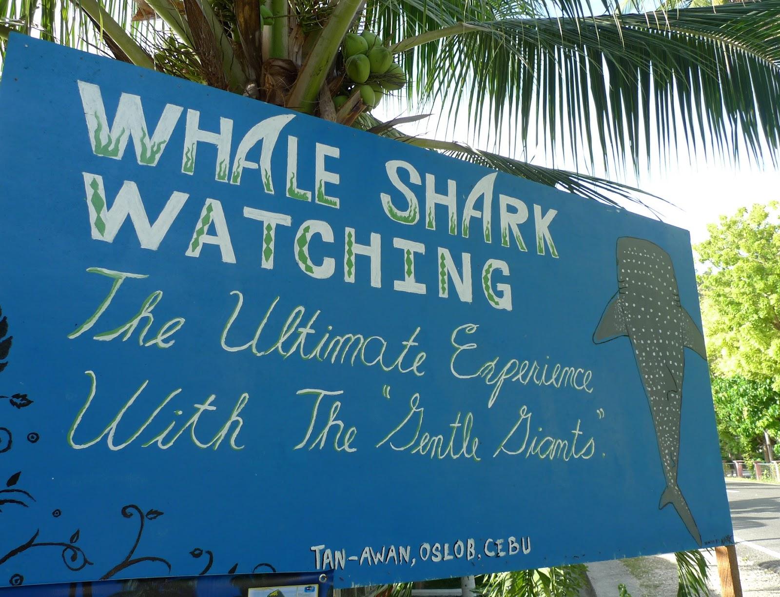 nikki s nurturance whale shark watching in oslob
