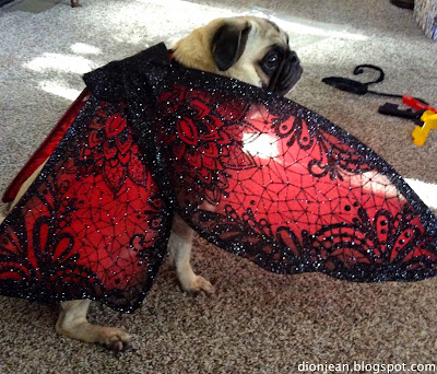 Pug in red butterfly wings
