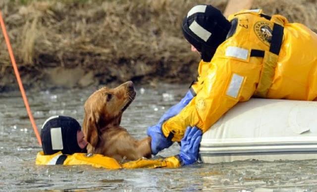 Actos heroicos que salvaron animales en peligro.