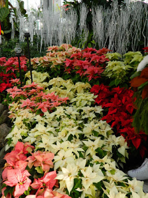 Layers of poinsettias Allan Gardens Conservatory  2015 Christmas Flower Show by garden muses-not another Toronto gardening blog