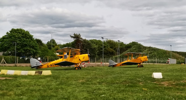 Two Tiger Moths on grass parking