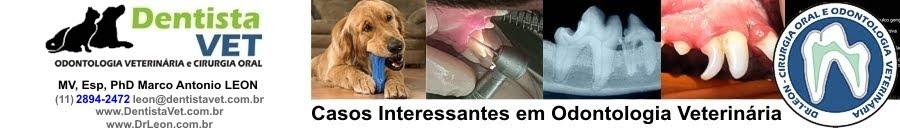 Odontologia Veterinária - Casos DentistaVet