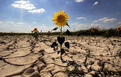 Evidencia cambio climático