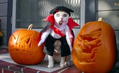 Funny halloween animals2-1