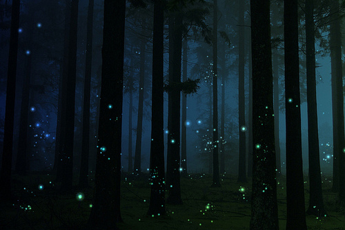 Indigo Roth's fireflies