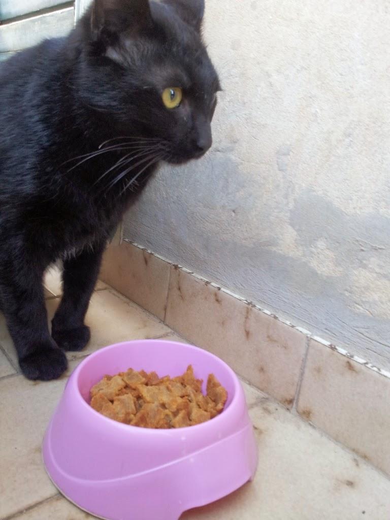 il gatto e i biscotti