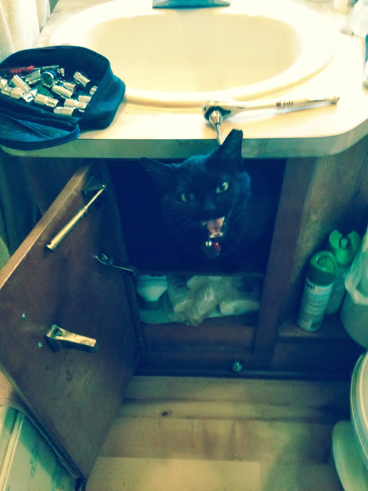 cat under sink