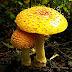 Amazing colourful Mushrooms