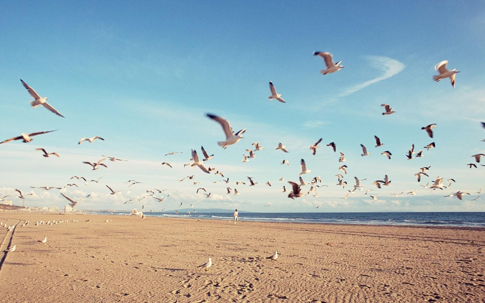 High Flying Birds