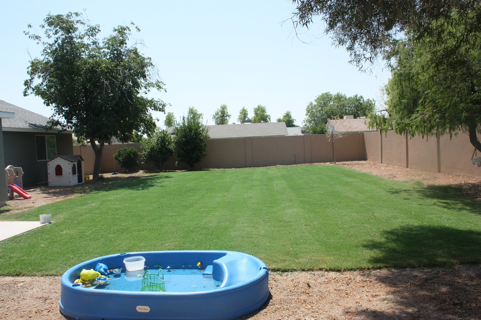 Backyard   We Have Grass!