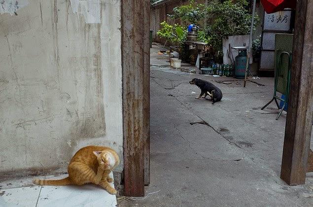 self taught street photographer tao liu china-15