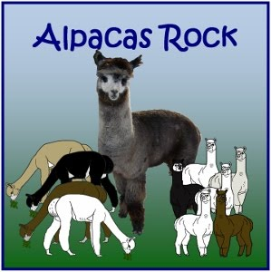 Alpacas Rock Animal Groups Products