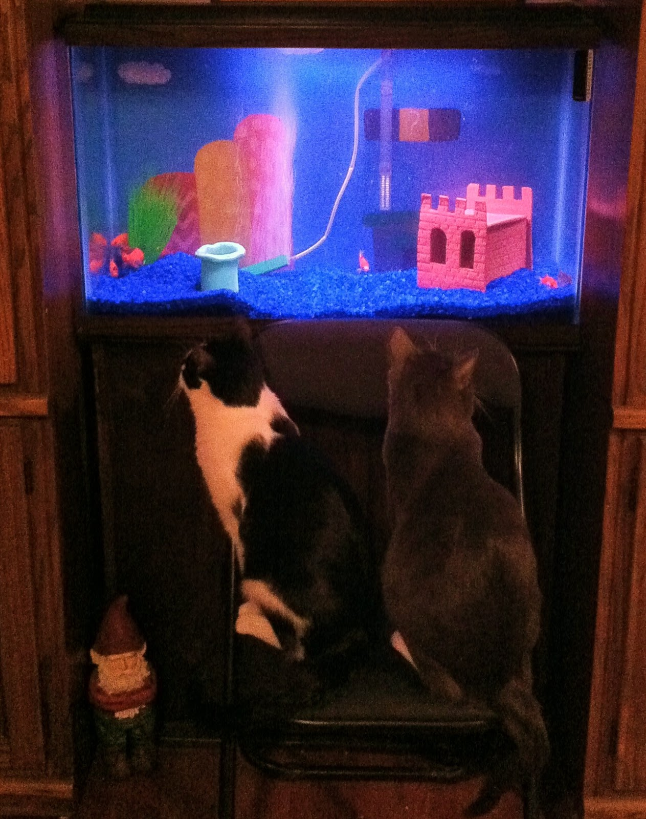 Super Mario Video Game Aquarium by AmericanGoodz title=
