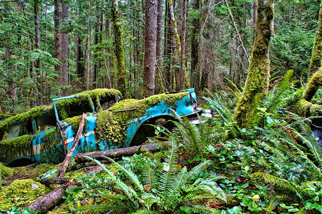old cars, abandoned cars, rusty cars, antique cars