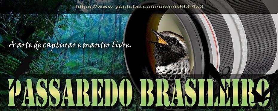 PASSAREDO BRASILEIRO - Brazilian Wild Birds