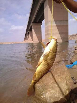 صيد السمك في سد بريزينة