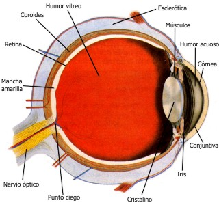 El ungüento del hinchazón del ojo después del golpe