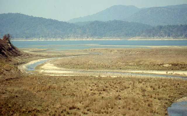 Beautiful view of Jim corbett national park ,India