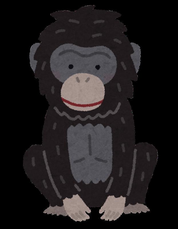 ボノボの画像 p1_37