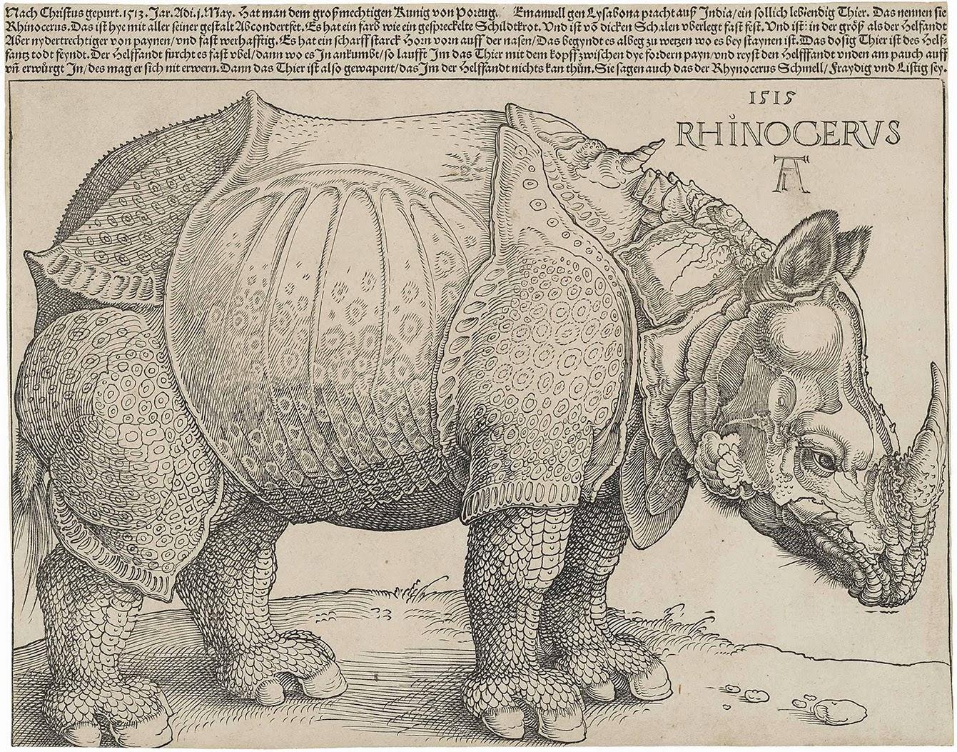 Alberto Durero, Rinoceronte