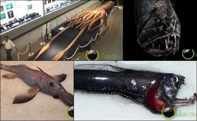 8 Makhluk Aneh yang pernah Ditemukan di Lautan Dalam