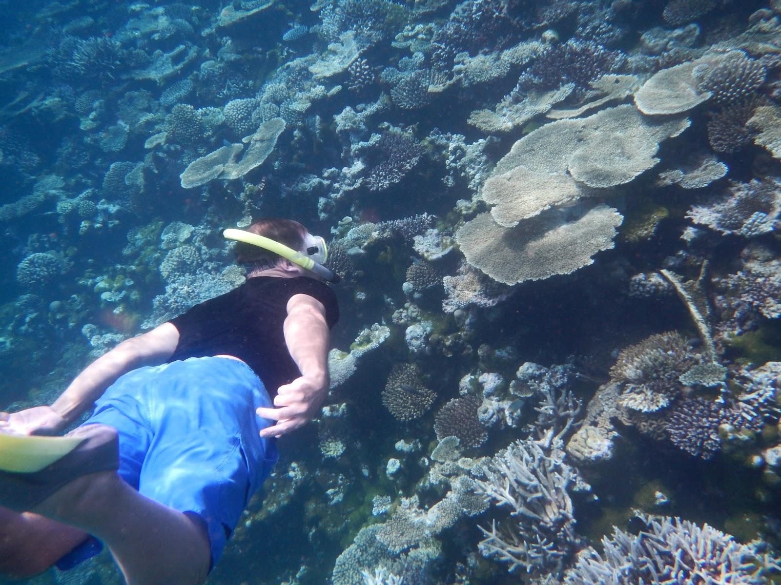 farliga hajar maldiverna