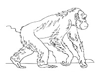 Walking Apes Kids Coloring Pages
