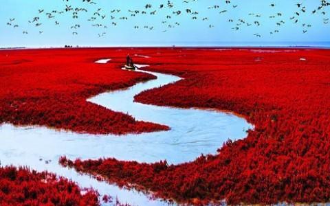 ozartsetc red beach panjin china 06 من أجمل شواطئ العالم '' الشاطئ الأحمر '' في مدينة بانجين بالصين