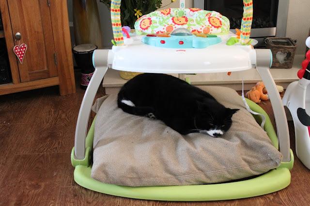 Cat sleeping on babies things