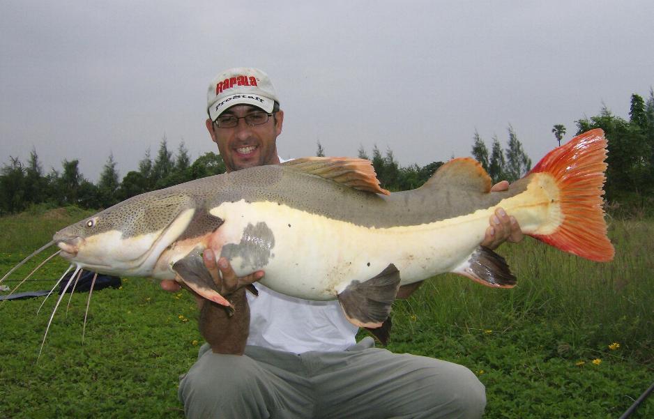 Pesca intorno al mondo tailandia bsl rachaburi for Grosso pesce di lago