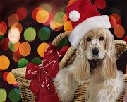 DIBUJOS FOTOS IMAGENES: DIBUJOS DE NAVIDAD ANIMALES (animales de navidad )